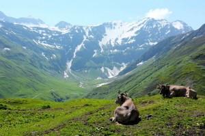 Montblanc - Trekking - Manaslu Adventures