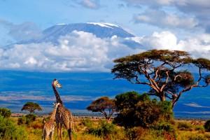 Naturaleza - Monte Kilimanjaro - Manaslu Adventures