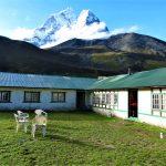 Región Everest. Dingboche lodge 4410m con vistas a Tamserkhu 6618m