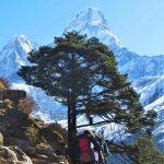 Región Everest. Pico Ama Dablam 6814m desde Shomare 4010m