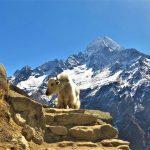 Región Everest. Tamserkhu peak 6618m, vistas desde Khumjung 3800m (1)