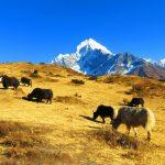 Región Everest. Thamserku 6618m desde una granja de Yaks en Syangboche3720m