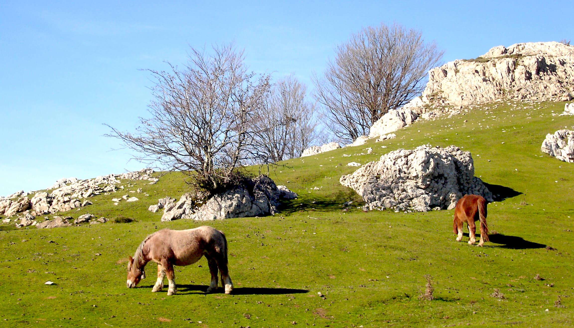 Parque Natural Aizkorri