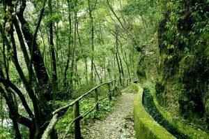 Ruta Marcos y Cordero. Isla de la Palma. Canarias